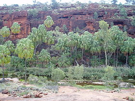 280px-Palm_Valley_NT